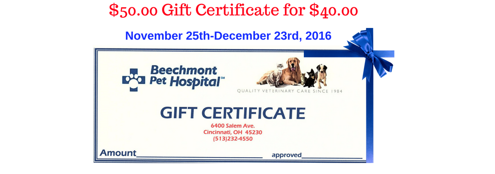 50-00-gift-certificate-for-40-00
