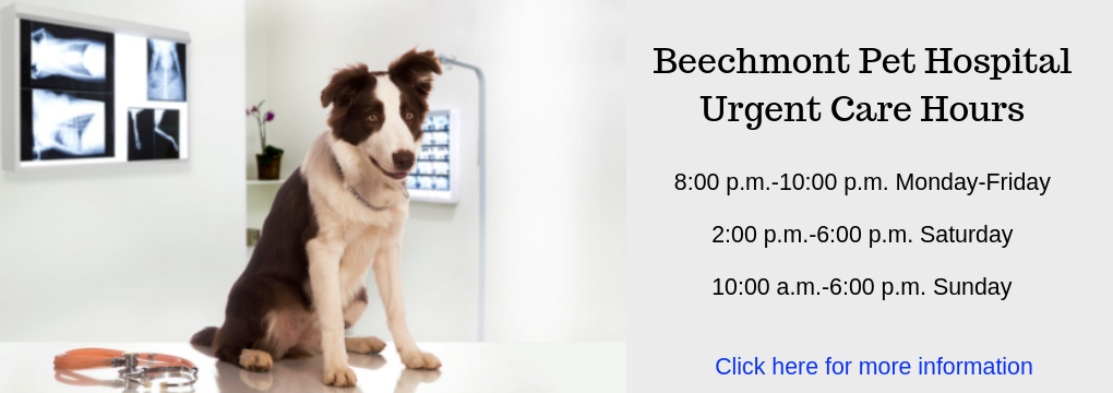 Beechmont Pet Hospital   Cincinnati Veterinary Clinic